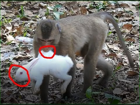 Oh No! This monkey Bite rabbits so hard, poor rabbit Jungle Safari