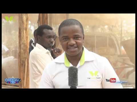 BREEDING CASH: AQUOFLO KENYA LTD.