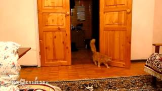 Kot kontra muzyczka z Mario :D