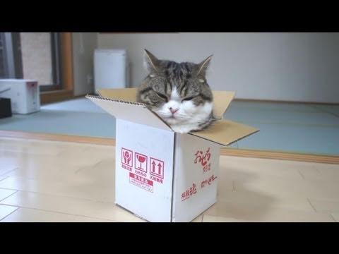 別以為是小箱子我就進不去…