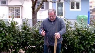 #327 Schneiden im Garten 2011 Herr Inderkum 7v10 - Schnitt eines Aprikosenbaums