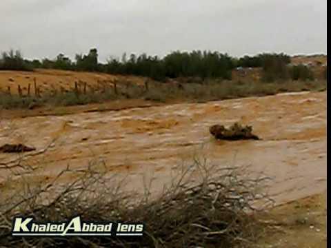 شعيب وادي الرمة في عنيزة( 3)