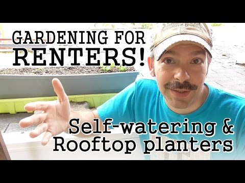 , title : 'Urban Gardening Tips for Renters: Self-Watering Containers / Rooftop Terraces / Community Gardens'