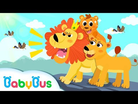 King of Forest: Big Lion | Baby Panda Goes to Forest | Kids Songs collection | BabyBus