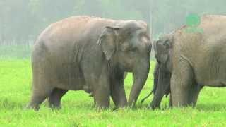 Elephants Playing In The Rain