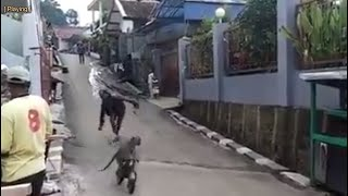Atraksi Monyet Ngedrag Naik Sepeda Tapi Remnya BLONG Bikin Ngakak!