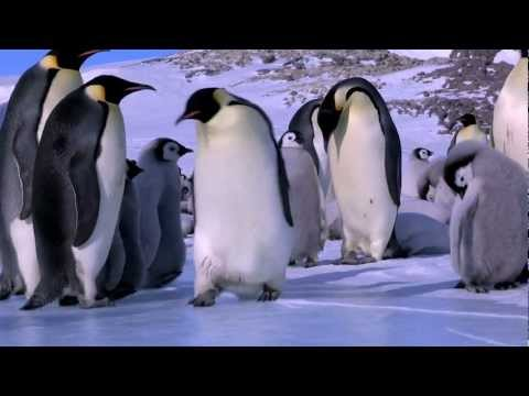 Penguin Fail Best Bloopers from Penguins Spy in the