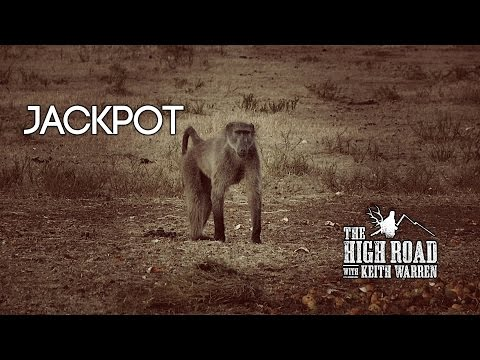 Impala, Blue Wildebeest, and a Baboon -