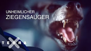 Terra X - Monster (Dokumentarfilm)