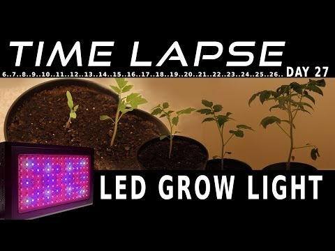 LED grow light plant grow timelapse