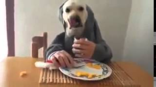 Dog Eating With Fork And Human Hands