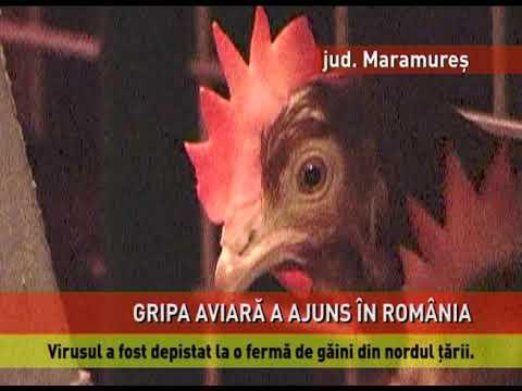 Gripă aviară, la o fermă de păsări din județul Maramureș