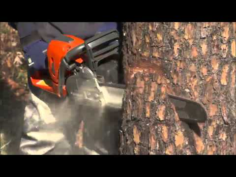 Chainsaw - Watch our qualified Husqvarna trainer fell a tree in a real world application using the methods and techniques he teaches. Website: http://www.husqvarna.com/...