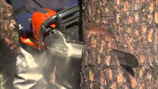 Video How to Fell or Cut Down a Tree Using a Chainsaw MP3, 3GP, MP4, WEBM, AVI, FLV September 2019