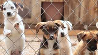 Gallup (NM) United States  City new picture : SAVE THE MCKINLEY COUNTY HUMANE SOCIETY, GALLUP, NM