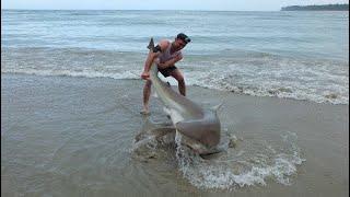 Video Land based Shark fishing NZ download in MP3, 3GP, MP4, WEBM, AVI, FLV January 2017