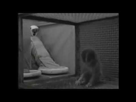 Депривация - съемки экспериментов Гарри Харлоу о материнской любви