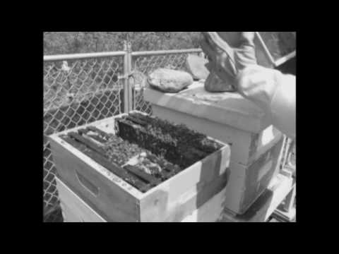 How To Set Up Beginners Bees 2010.wmv