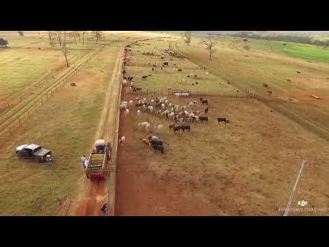 Mauricio Lerro - Zootecnista (видео)