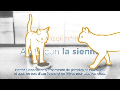 Comment guerir une cystite chez un chat ? La réponse est