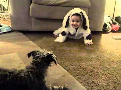 狗認為寶寶是一隻狗