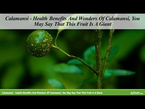 Calamansi – Health Benefits And Wonders Of Calamansi, You May Say That This Fruit Is A Giant
