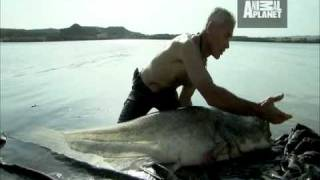 River Monsters - Built to Kill