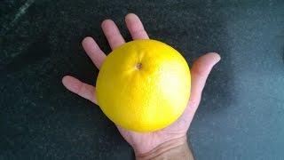 """SUSCRÍBETE: http://goo.gl/aRHxPkPomelo CítricoVitamina C y PotasioAunque los pomelos blancos y rosados se diferencian considerablemente según las cantidades de algunos nutrientes, en otros casos son esencialmente equivalentes. Todas las variedades de pomelos poseen altos niveles de vitamina C y existe una leve diferencia entre el pomelo rosado y blanco en relación a este nutriente. Una taza de pomelo provee aproximadamente 70 mg o 120 por ciento de la vitamina C necesaria por día. Los pomelos blancos y rosados también poseen casi la misma cantidad de potasio. Una taza contiene aproximadamente 300 mg o 15 por ciento del consumo diario recomendado.Azúcar, fibra y caloríasEl azúcar, la fibra y las calorías de los pomelos rosados y blancos son comparables en términos generales. Una taza de pomelo rosado contiene aproximadamente 97 calorías, 16 g de azúcar y 4 g o 15 por ciento del consumo diario recomendado de fibra. Una taza de pomelo blanco posee 76 calorías, 17 g de azúcar y 3 g o 10 por ciento del consumo diario recomendado de fibra.SaborEl pomelo rosado es, notablemente, más dulce que el pomelo blanco, a pesar de que el contenido de azúcar es comparable. En consecuencia, el pomelo rosado es preferido por muchos consumidores y ahora se vende más y se puede encontrar con más facilidad que las variedades de pomelo blanco.En el mes de Julio se festeja en la Provincia de Formosa, Argentina la """"Fiesta Nacional del Pomelo"""""""