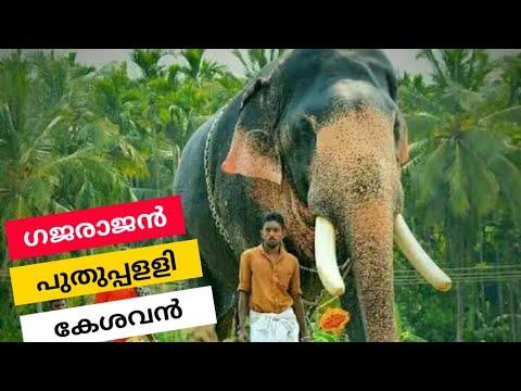 പുതുപ്പള്ളി കേശവന്റെസഞ്ചാരം Puthuppally Kesavan| An Elephant's Journey Through Lorry NH 66