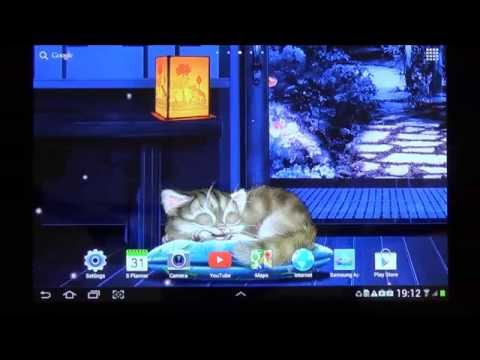 Video of Sleeping Cat Live Wallpaper