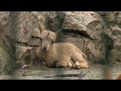 Frankfurt am Main: Zoo Frankfurt - Premiere im Frankf ...