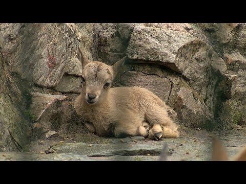 Zoo Frankfurt: Premiere im Frankfurter Zoo - Ture / ...