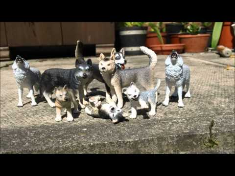 Schleich Wolf and Husky toy collection