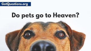 Have you ever wondered, do dogs go to heaven? Do pets / animals have souls? When a beloved pet dies, these are questions a lot people need answered.