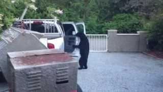 Bearjacked Car