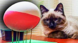 В этом видео вы увидите 10 лайфхаков, которые помогут подготовиться к Пасхе. В нем узнаете, как правильнее варить яйца, как правильно биться яйцами, как оригинально красить яйца и другое.♛ Подключай свой канал к AIR, снимай видосики и зарабатывай на этом ☛ http://bit.ly/regAIR🎥 ТОП 10 ВИДЕО НА КАНАЛЕ:✔ 10 безопасных лайфхаков со спичками ч.2 - http://bit.ly/1TgGzRV✔ 5 крутых лайфхаков со спичками ч.1 - http://bit.ly/27Cp9ng✔ #DIY Страйкбольная граната - http://bit.ly/29vmqGI✔ Взрываю 10 гранат разом + взрываю друга - http://bit.ly/2etHnBA✔ 10 лайфхаков для лета 2016 - http://bit.ly/2dqqeq3✔ Взрываю 100 гранат разом - http://bit.ly/2mN5dLm✔ 20 лайфхаков со спичками - http://bit.ly/2lVChn0✔ 10 лайфхаков с резинками - http://bit.ly/22gNriy✔ 7 лайфхаков с вилкой - http://bit.ly/1U0OZXR✔ 5 новых лайфхаков со спичками ч.3 - http://bit.ly/2ekosIS🚶 Как меня найти:- Я ВКонтакте - https://vk.com/pashka_usik- Мой Instagram - https://www.instagram.com/pasha328/- Группа ВКонтакте - https://vk.com/show_banana- Твиттер - https://twitter.com/pasha_uskovНа канале Вы найдете много интересных видео по рубрикам: лайфхаки, самоделки, эксперименты и распаковки интересных товаров. В будущем планируются и другие рубрики. Советую Вам посмотреть видео, которые уже есть на канале и подписаться, чтобы не пропускать свежие видео, ведь впереди еще огромная банановая плантация новых видосов!  Не забывайте ставить лайки, оставляем комментарии и делимся видео с друзьями, Вам ведь не сложно, а мне приятно!)