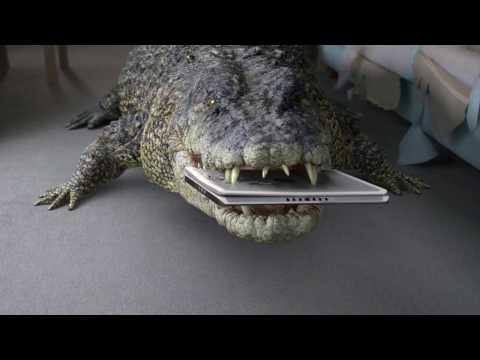 Crocodile Insurance 3D model