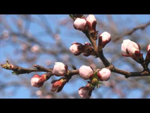 Антонио Вивальди (Аnтоniо Vivаldi).Времена года. Весна. - DomaVideo.Ru