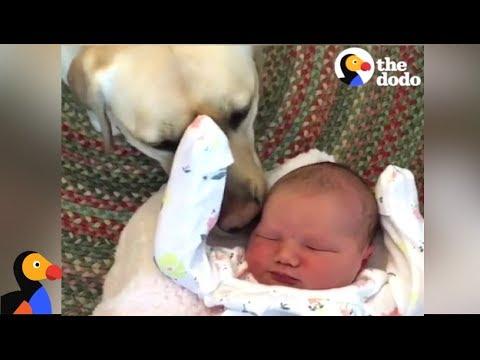 cani-e-neonati-al-primo-incontro