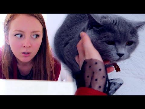 VLOG: У ПУМЫ ШИШКА! УДАРИЛАСЬ ДО КРОВИ  26.01.17 (видео)