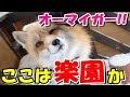 【海外の反応】外国人大絶賛!まさか日本にキツネが暮らす村があったなんて!宮城蔵王キツネ村はまさに彼らの楽園だね!
