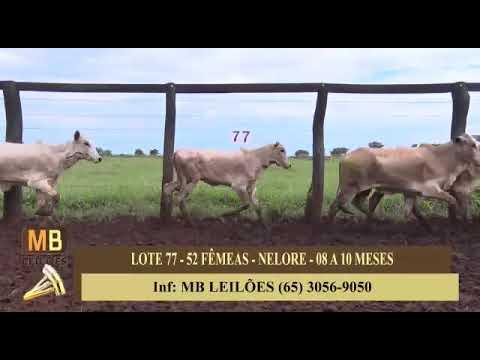 194º LEILÃO VIRTUAL MB LEILÕES