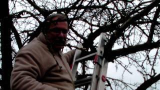 #300 Schneiden im Garten 2011 - Apfelhochstamm 3v6
