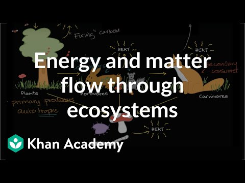 Flow of energy and matter through ecosystems (video) | Khan Academy