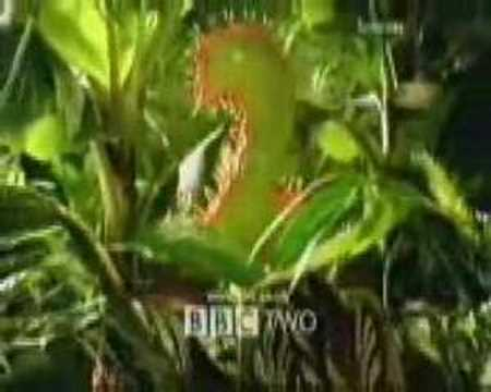 bbc2 - A Collection Of BBC 2 Idents From 1991 Through To 2001.