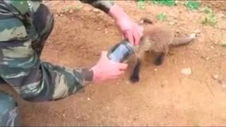 Mały lis dostrzega człowieka i błaga o pomoc. Zwierzę wiedziało, że samo sobie nie poradzi…