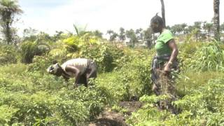 Experiences Gained In The Urban And Periurban Agriculture Project In Sierra Leone