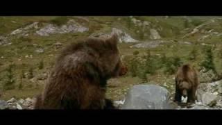 Пума охотится на медвежонка