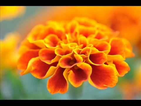 Abraham Hicks Rampage Of Appreciation