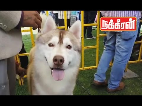 National-level-Dog-show-in-Kodaikanal-Visitors-Happy-to-see
